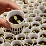 Tư vấn thủ tục đăng ký bảo hộ giống cây trồng