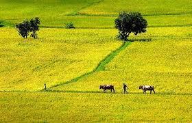 Thủ tục đăng ký quyền sử dụng đất